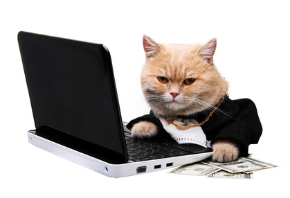 Katzen sind besser als investmentfondsmanager