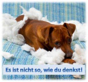 hundehalterhaftpflichtversicherung hundehaftpflichtversicherung Castrop-Rauxel
